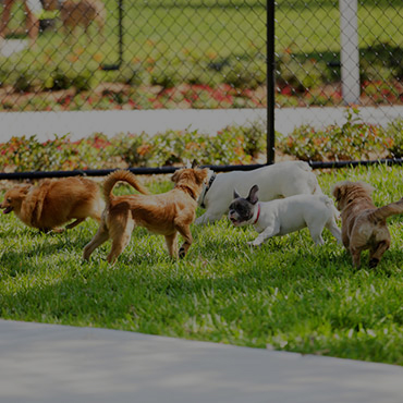 Large Dog Park at The View on the River Apartments