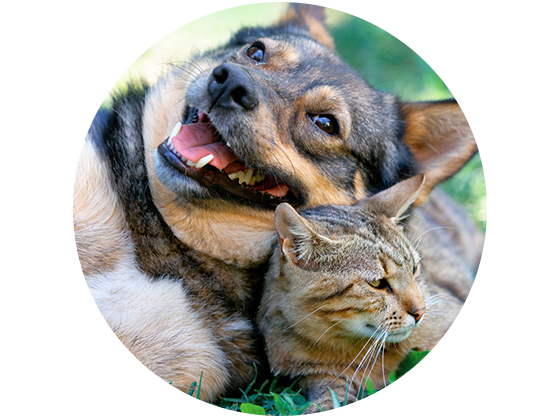 Pet Friendly Apartments in Jacksonville