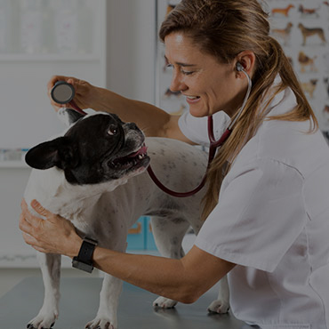 Nearby Pet Friendly Hospitals in Jacksonville